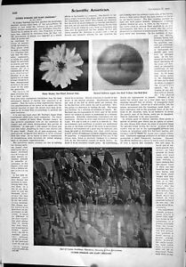 Old-1905-Scientific-American-Luther-Burbank-Plant-Breeding-Hybrid-App-20th