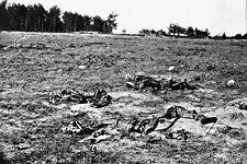 New 5x7 Civil War Photo: Bones on Battlefield of Cold Harbor, Chickahominy River