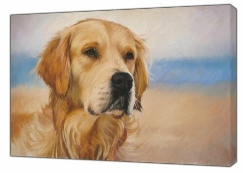 GOLDEN RETRIEVER DRAWN WITH CHARCOAL SOFT PASTEL PRINT ON FRAMED CANVAS WALL ART