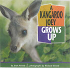 A Kangaroo Joey Grows Up by Richard Hewett, Joan Hewett (Paperback, 2001)