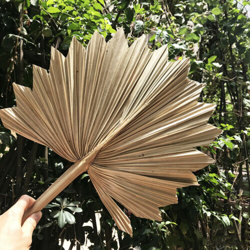 Natural Dried Palm Fan Leaves Artificial Flower DIY Wedding Party Home Ornament