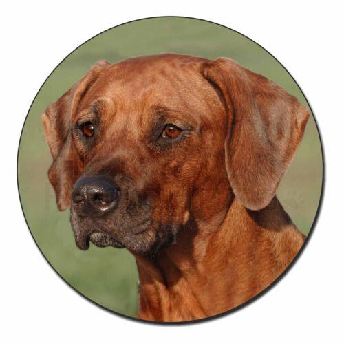 AD-RR1FM Rhodesian Ridgeback Dog Fridge Magnet Stocking Filler Christmas Gift