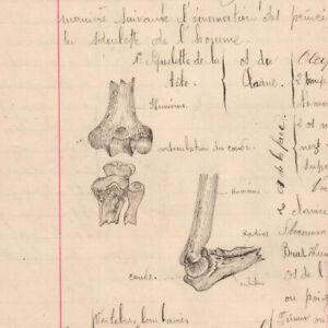 c1890-science-manuscript-document-SKELETON-MEDECIN-handmade-illustration-drawing