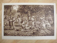 Antique Teaching Card 77, Breaking Cocoa Pods In Trinidad by J. Macfarlane