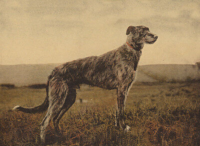 DEERHOUND CHARMING DOG GREETINGS NOTE CARD BEAUTIFUL DOGS IN RURAL SETTING