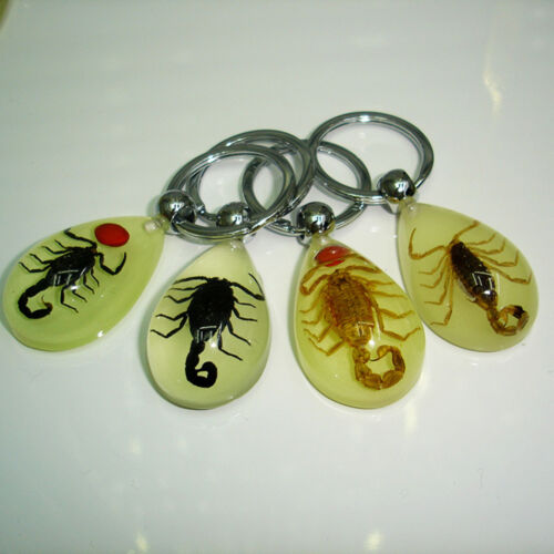 Scorpion Glow Lucite Keyring Keychain Insect Jewelry Taxidermy Gift PipMAEK