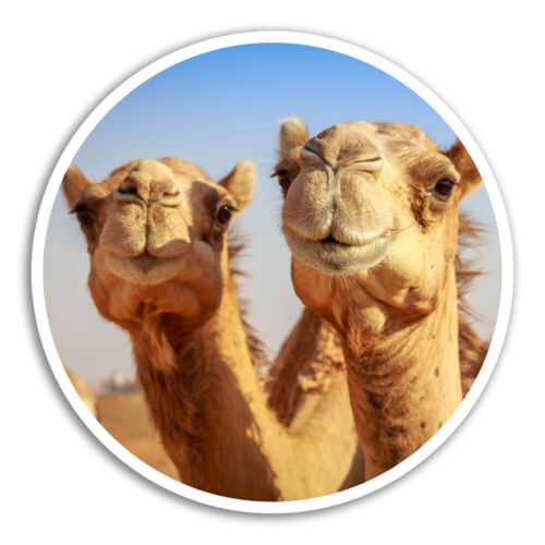 2 x 10cm Funny Camels Vinyl Stickers Desert Egypt Sticker Laptop Luggage #8278