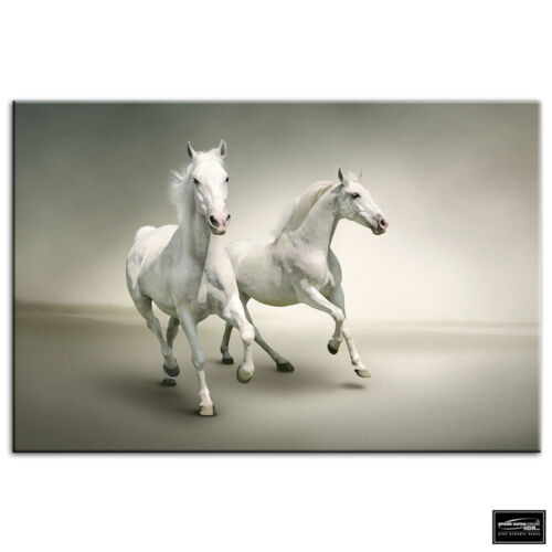 White Horses   Animals BOX FRAMED CANVAS ART Picture HDR 280gsm