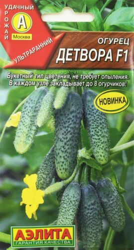 Kids F1 Cucumber Seeds from Russia. Non GMO