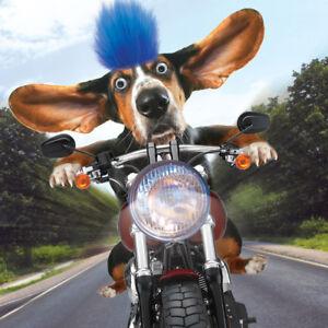 Basset Hound Birthday Card 3d Goggly Eyes Fluff Funny Biker Dog