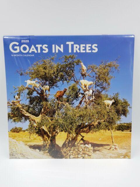 Goats In Trees 2020 Calendar funny animal art Office School vet NEW SEALED