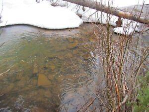 Colorado Gold Mine Taylor Creek Placer Mining Claim Creek Silver Panning Snipe
