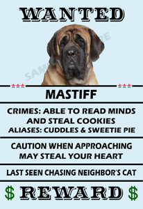 Great Dane Dog Wanted Poster Flex Fridge Magnet 2.75 X 4.0