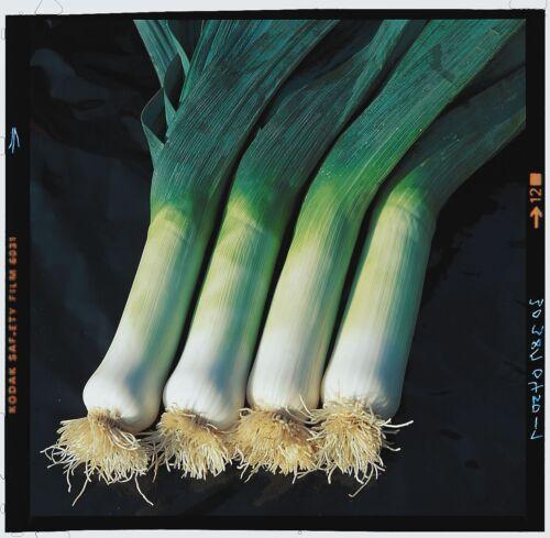 Leek Hannibal Vegetable 1000 Seeds Large