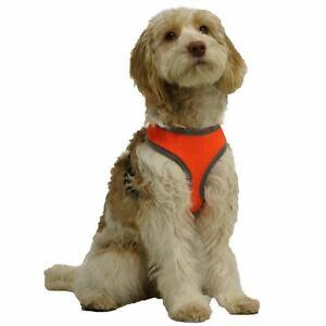 SéRieux Rosewood Night Dog Walking Réfléchissant Rembourré Harnais (taille Moyenne)-afficher Le Titre D'origine Saveur Pure Et Douce