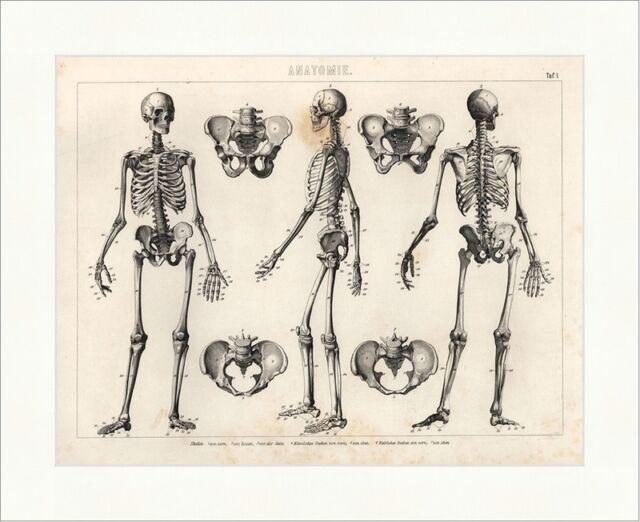 Skelet Becken von vorne hinten Seite Brockhaus Bilder Atlas Anatomie ...