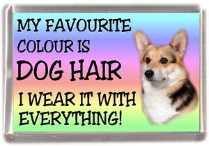 Pembroke-Welsh-Corgi-Fridge-Magnet-034-My-Favourite-Colour-is-Dog-Hair-034-Starprint