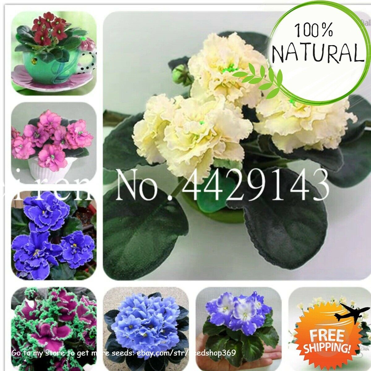 African Violet Flower Seeds Plants Garden Bonsai Perennial Herb Flores Rare