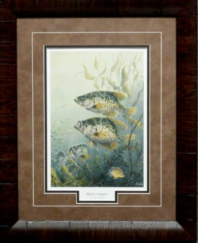 Terry Doughty Black Crappies Framed Fishing Print