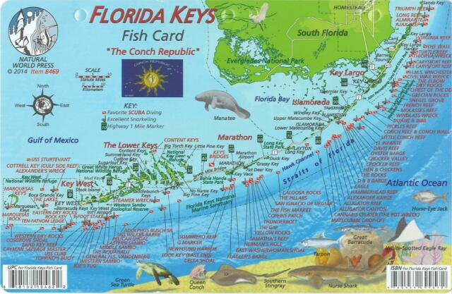 Detailed Map Of The Florida Keys.Florida Keys Fish Card By Frank Nielsen Dive Locations Reef Creature Guide