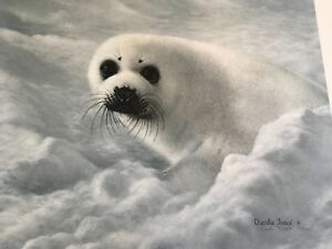 Charles-Frace-Baby-Harp-Seal-autographed-lithograph-Print-361-2000
