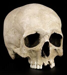 Skull-Replica-Mann-Menschen-Skull-Decorative-Figure-Lifelike-Realistic