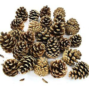 Confezione-da-1-kg-di-AUSTRIACA-PINO-ALBERO-CONI-Natale-Festive-Decorazione-circa-50