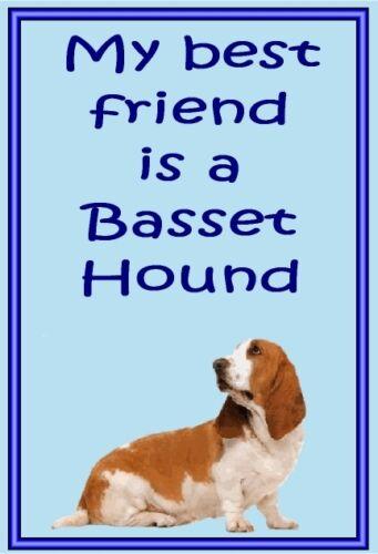 New Free UK p//p Dog fridge magnets New Gift Basset Hound