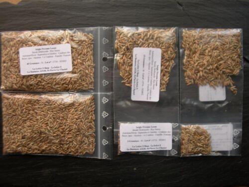 Secale multicaule - mehrjährige Roggen gut Dünger grün - - SEM02