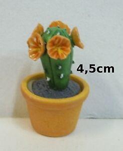 cactus fleuri miniature vitrine serre maison de poupee - Jardin Japonais Miniature Cactus