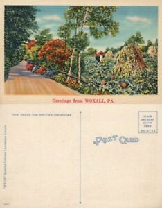 GREETINGS-FROM-WOXALL-PA-VINTAGE-POSTCARD-night-scene