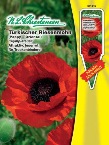 Papaver Oriental Approx Turkish Giant Poppy /'Olympiafeuer/' 100 Seeds 50347