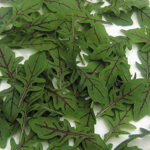 Rucola Dragon/'s Tongue Rocket 100+ seeds INTERESTING and FINE!