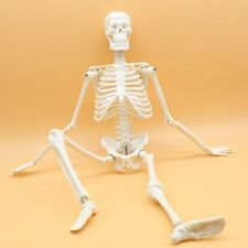 Maymii 14 Life Size45cm 175 Anatomical Human Skeleton Model Medical Poster
