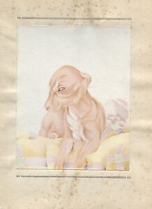 E J Detmold Vintage Print The Whippet -The Book of Baby Dogs 1929