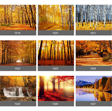 Autumn Tree Leaves Forest Wall Mural Photo Wallpaper Picture Self Adhesive