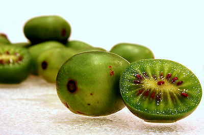 h376 Hardy Baby Kiwi Seeds Promote The Production Of Body Fluid And Saliva 20 Graines KiwaÏ De Siberie actinidia Arguta Issai