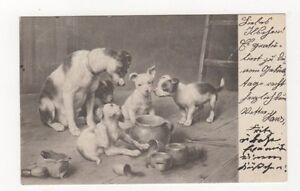 Dogs-Germany-1904-Postcard-437a