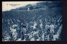 CHABLIS Yonne CPA 89 VALMUR scene de vendanges vin vigne