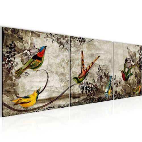 Murales imágenes XXL vintage pájaro tela imagen del lienzo son impresiones artísticas 108634p
