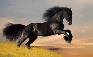 UK wholesale online ZWPT96 100% hand-painted fancy horse ...