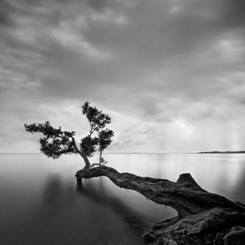 Water Tree by Moises Levy 12x12 B//W Photo Seascape Poster COASTAL ART PRINT