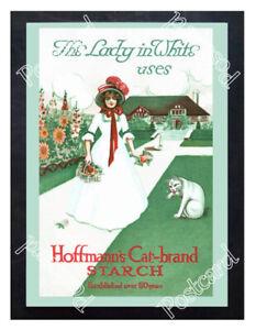 Historic-Hoffmann-039-s-Cat-Brand-Starch-Advertising-Postcard