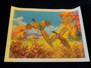 Vintage Rooster Pheasant Pair Flushed Flying Bird Print T