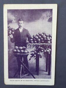 1908-Postcard-ROCKHAMPTON-Franco-British-Exhibition-FRUITS-GROWN-AUSTRALIA