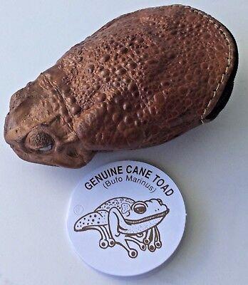 Stunning Cane Toad Skin full body  Zip Up Coin Purse Australian made Rare