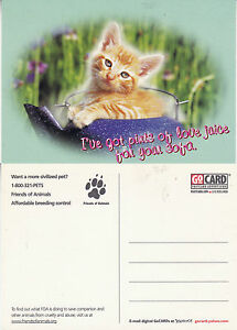 FRIENDS-OF-ANIMALS-BREEDING-CONTROL-UNITED-STATES-UNUSED-ADVERTISING-POSTCARD-a