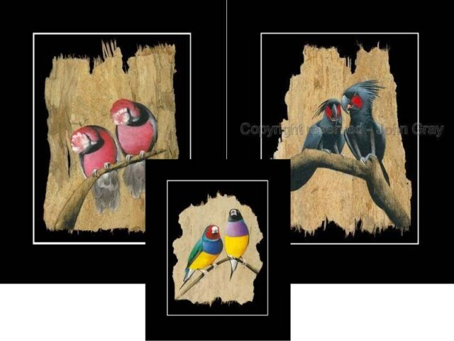 1x3 Prints .FINCH,GALAH,PALM -SIGNED - Unique Bark Art by John Gray