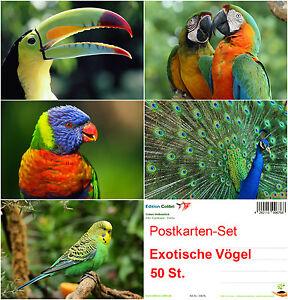 034-EXOTISCHE-VOGEL-034-Postkarten-Set-50-St-ideal-fuer-Postcrossing