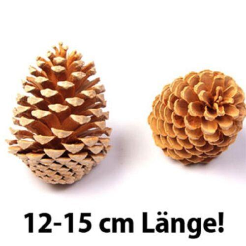 Des pommes de pin 12-15 cm longueur pour bricoleur